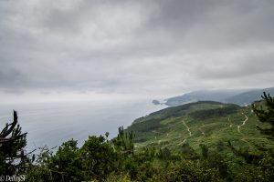 AVENTURAS, DelfínJSF